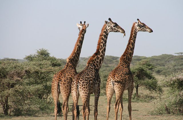ספארי בטנזניה – השמורות היפות ביותר